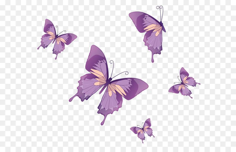 Descarga gratuita de Mariposa, Nymphalidae, Color imágenes PNG