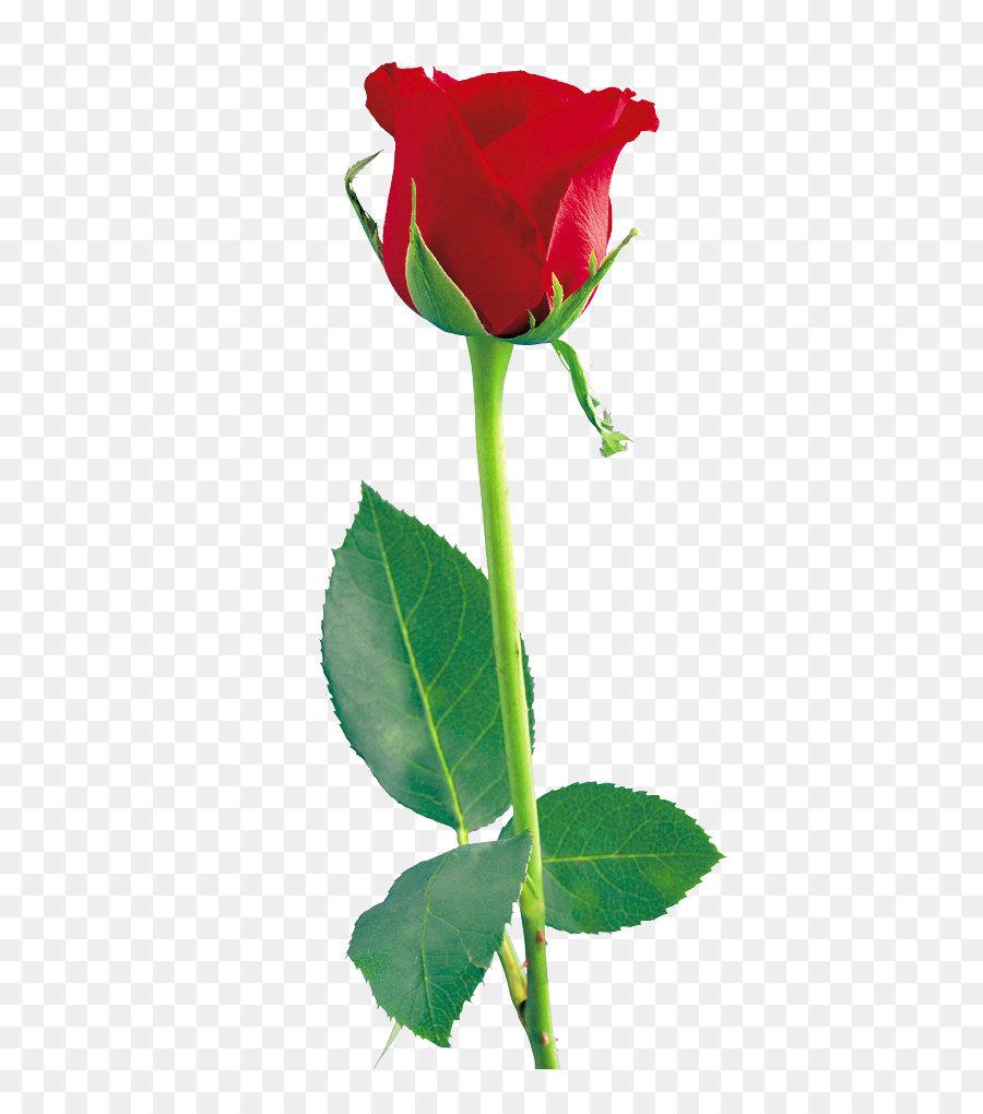 Descarga gratuita de Flor, Rosa, Rosa Flores Imágen de Png