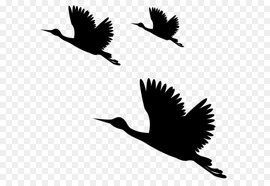 Descarga gratuita de Aves, Común Raven, Picsart Photo Studio Imágen de Png