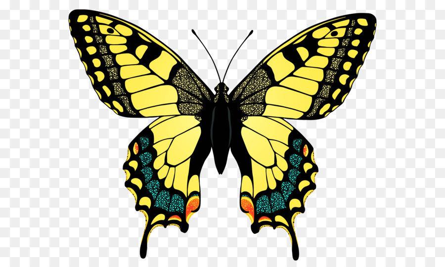 Descarga gratuita de Mariposa, Negro De Cola De Golondrina, Papilio Palamedes imágenes PNG
