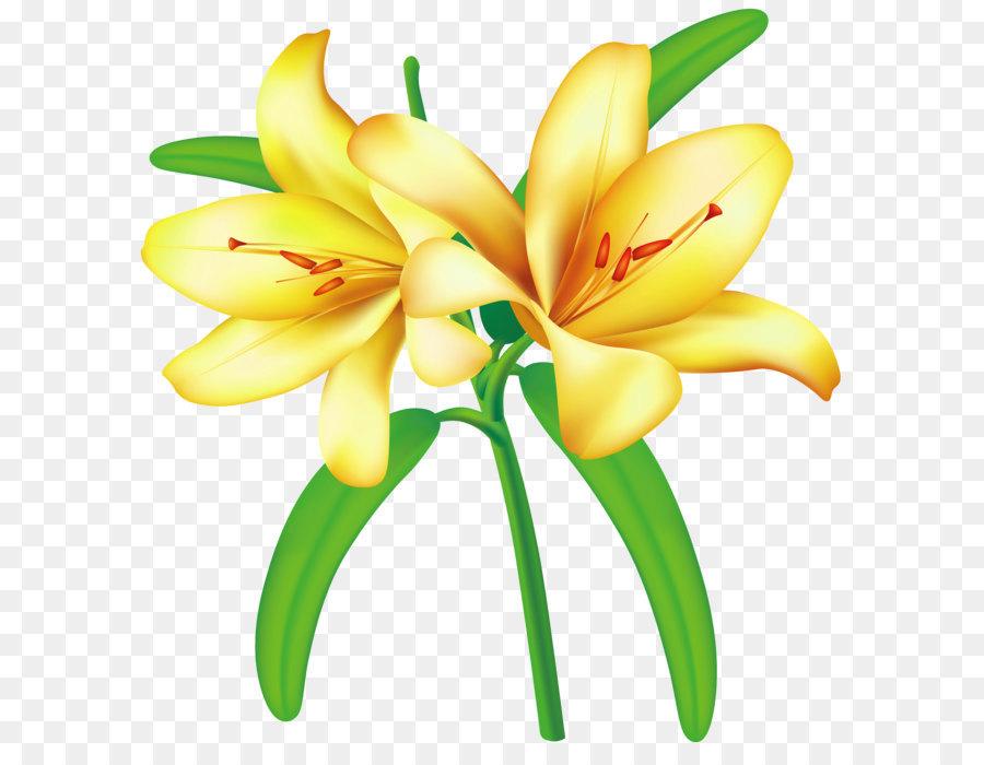 Descarga gratuita de Flor, Amarillo, Lilium Imágen de Png