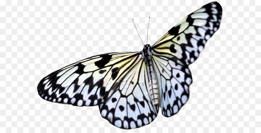 Descarga gratuita de Mariposa, Los Insectos, Nymphalidae imágenes PNG