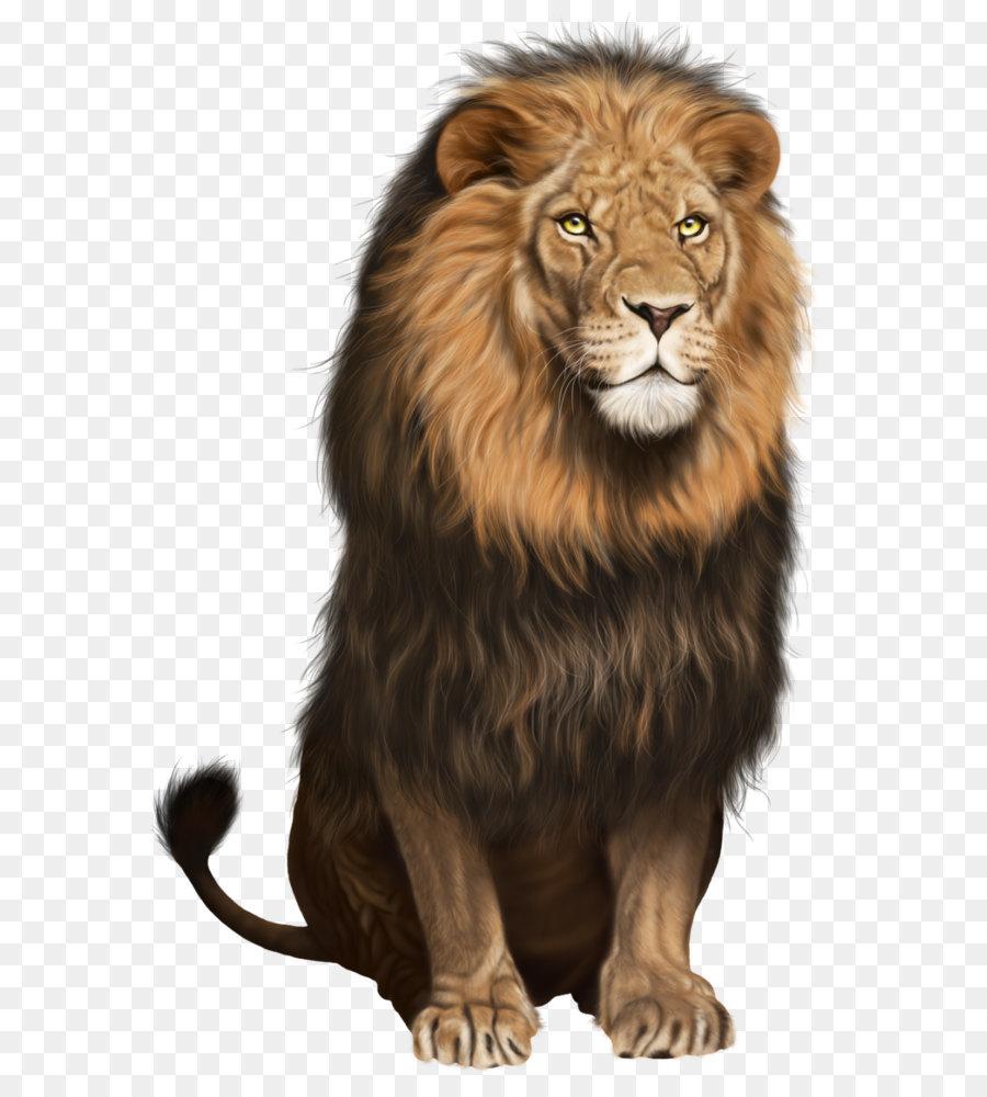 Descarga gratuita de Lionhead Conejo, León, Gatito Imágen de Png