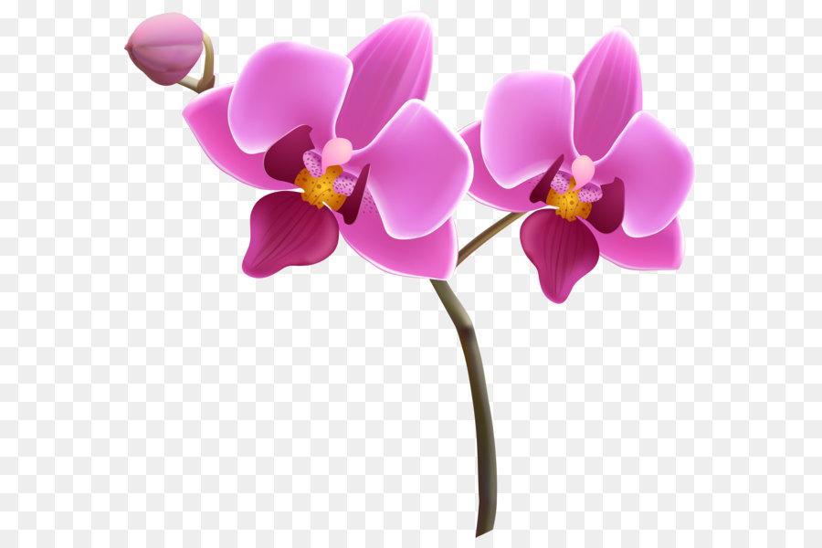 Descarga gratuita de Las Orquídeas, Flor, Dendrophylax Lindenii Imágen de Png