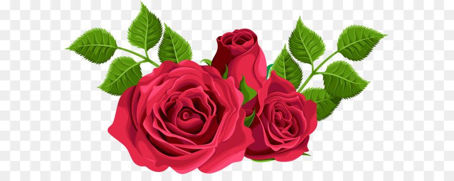 Descarga gratuita de Flor, Agua De Rosas, De Las Rosáceas imágenes PNG