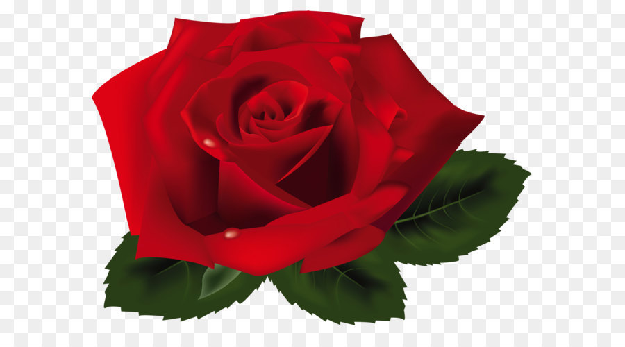 Descarga gratuita de Rosa, Flor, Inkscape Imágen de Png