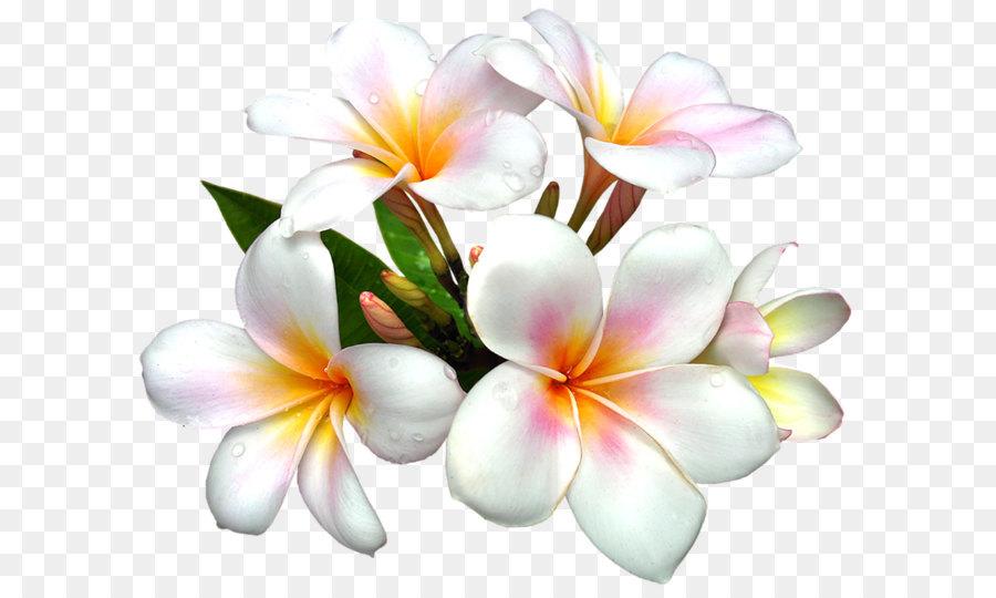 Descarga gratuita de Flor, Blanco, Lilium Imágen de Png