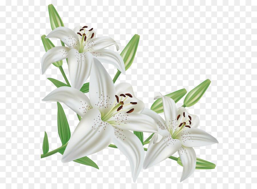 Descarga gratuita de Lirio Blanco, Tiger Lily, Flor Imágen de Png