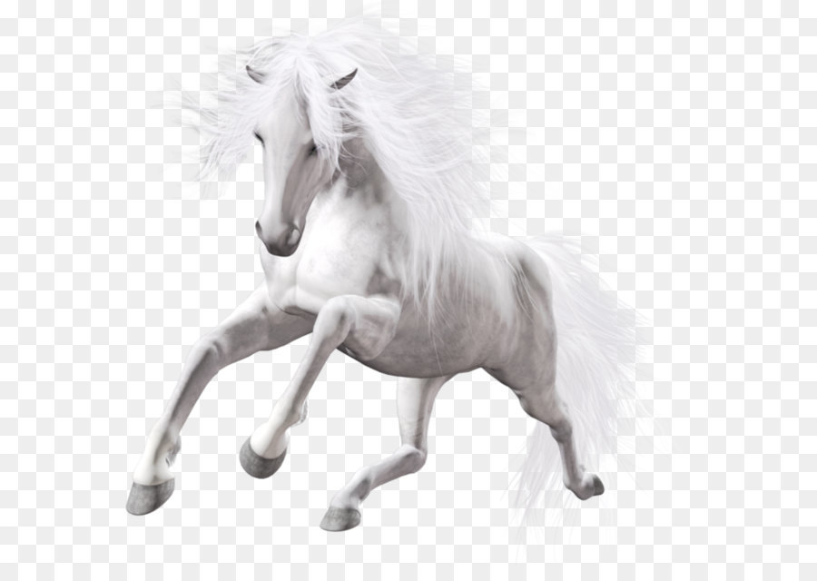 Descarga gratuita de Lipizzan, Mustang, Howrse Imágen de Png