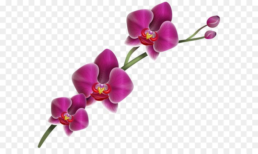 Descarga gratuita de La Polilla De Las Orquídeas, Flor, Lilium imágenes PNG