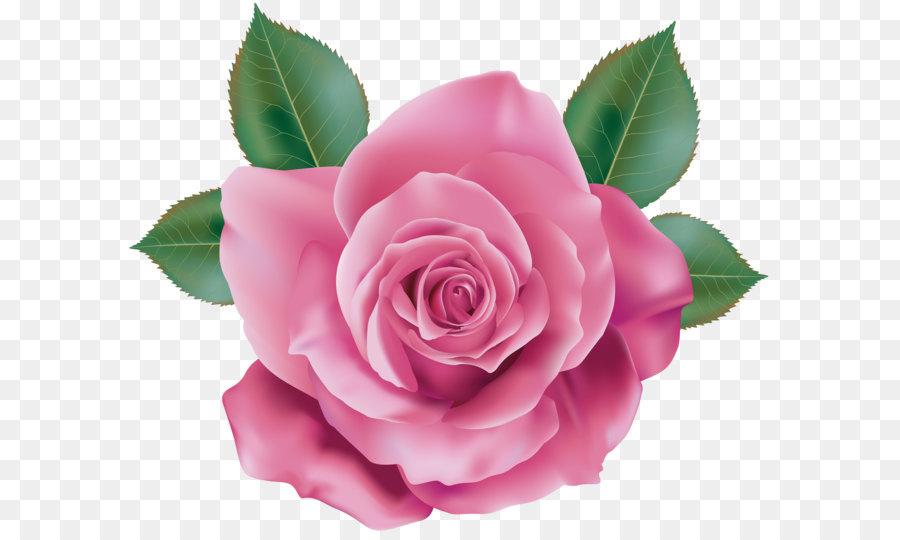 Descarga gratuita de Rosa, Flor, Floral Diseño Imágen de Png