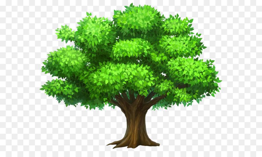 Descarga gratuita de árbol, Roble, Mangifera Indica imágenes PNG
