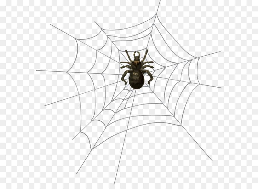 Descarga gratuita de Araña, Internet, Cámara imágenes PNG