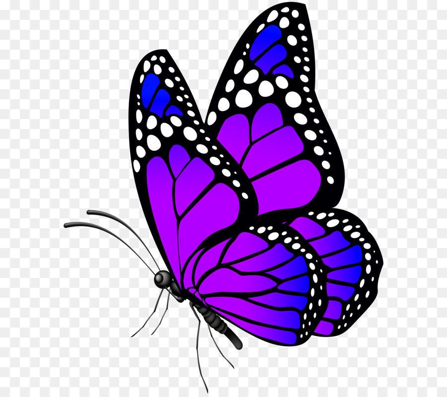 Descarga gratuita de Mariposa, Los Insectos, Azul imágenes PNG