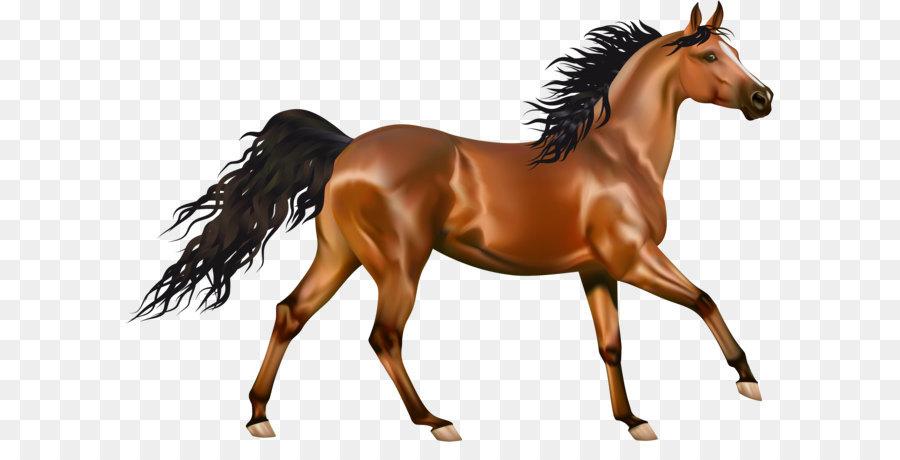 Descarga gratuita de Pura Sangre, Pony, Potro imágenes PNG