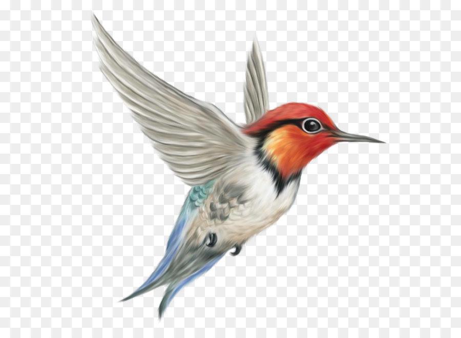 Descarga gratuita de Aves, Colibrí, Las Gaviotas imágenes PNG