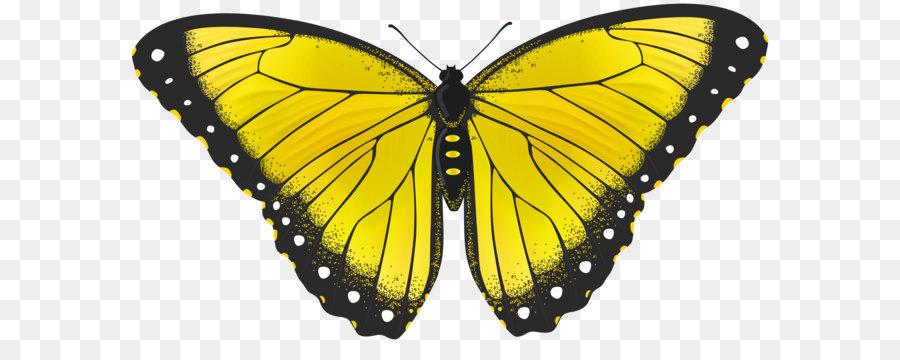 Descarga gratuita de Mariposa, Amarillo, Color imágenes PNG