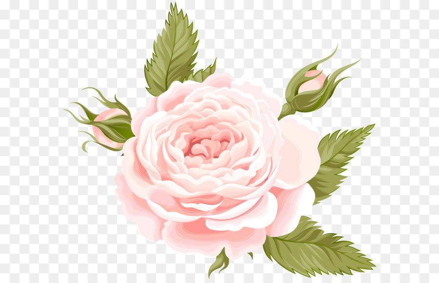 Descarga gratuita de Flor, De Las Rosáceas, Rosa Imágen de Png
