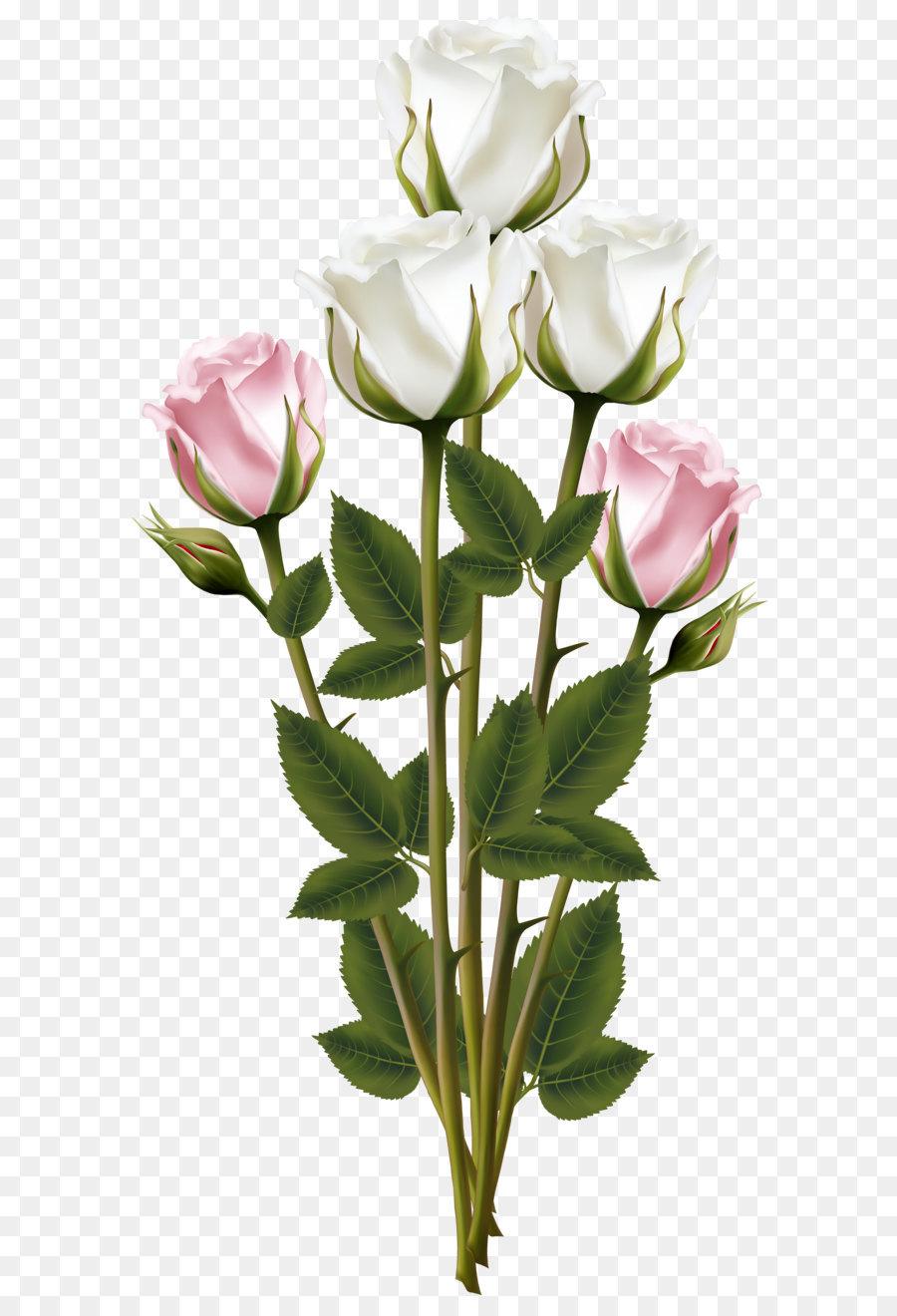 Descarga gratuita de Rosa, Flor, La Floración De La Planta Imágen de Png