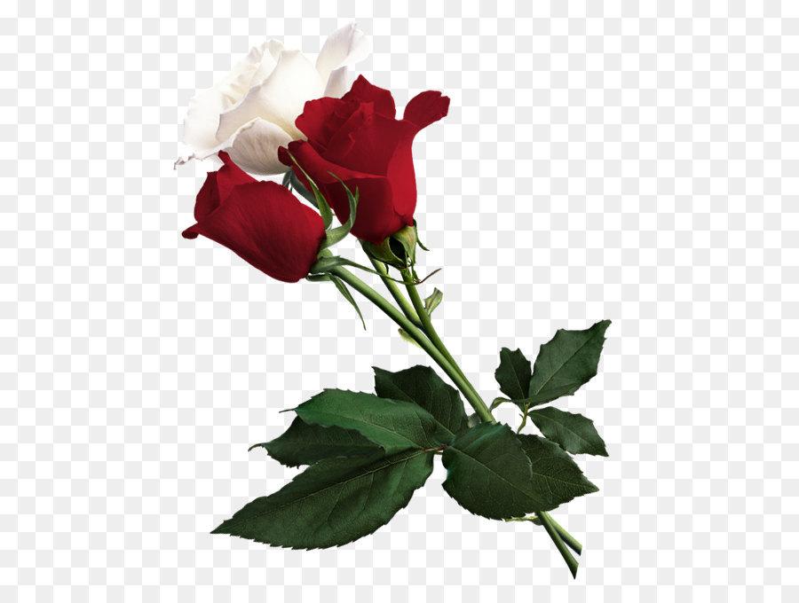 Descarga gratuita de Rosa, Flor, Blanco Imágen de Png