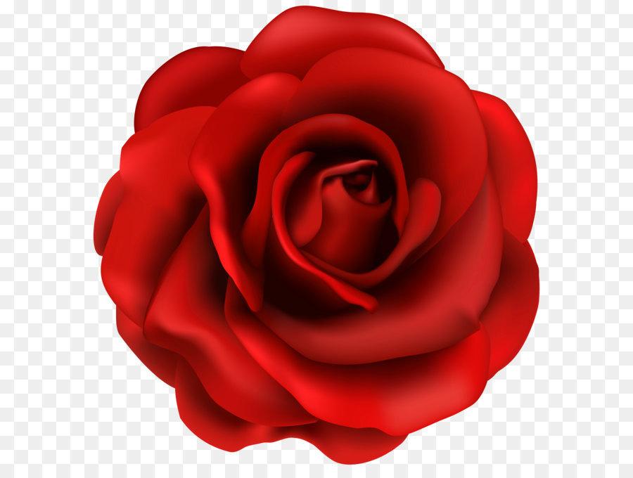 Descarga gratuita de Rojo, Flor, Blog imágenes PNG