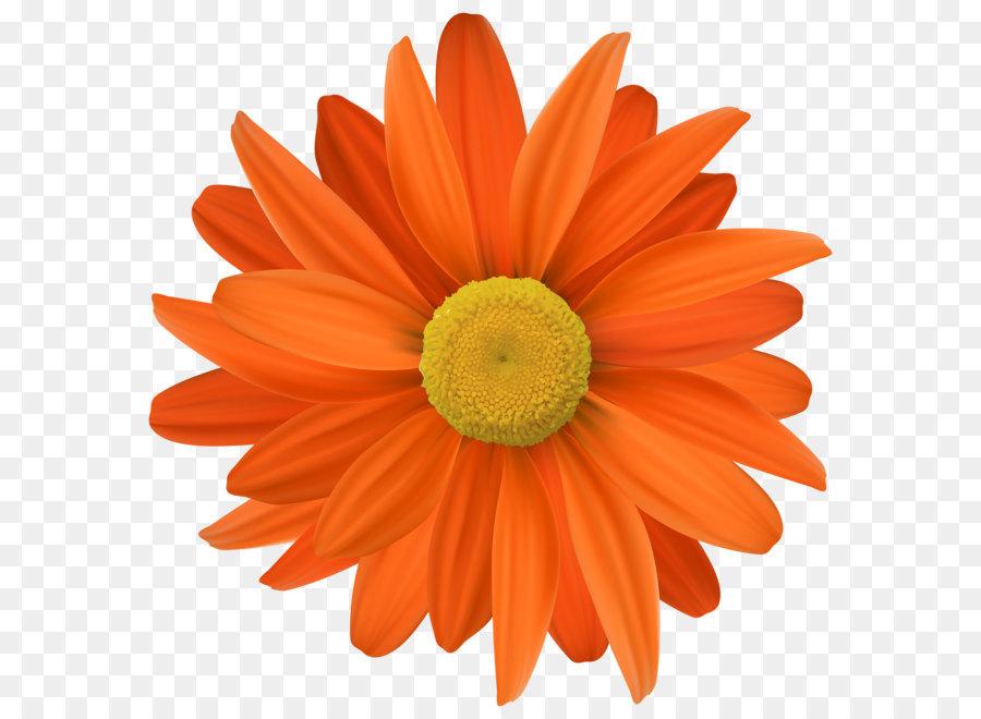 Flor Flor De Naranja Png Transparente Clip Art