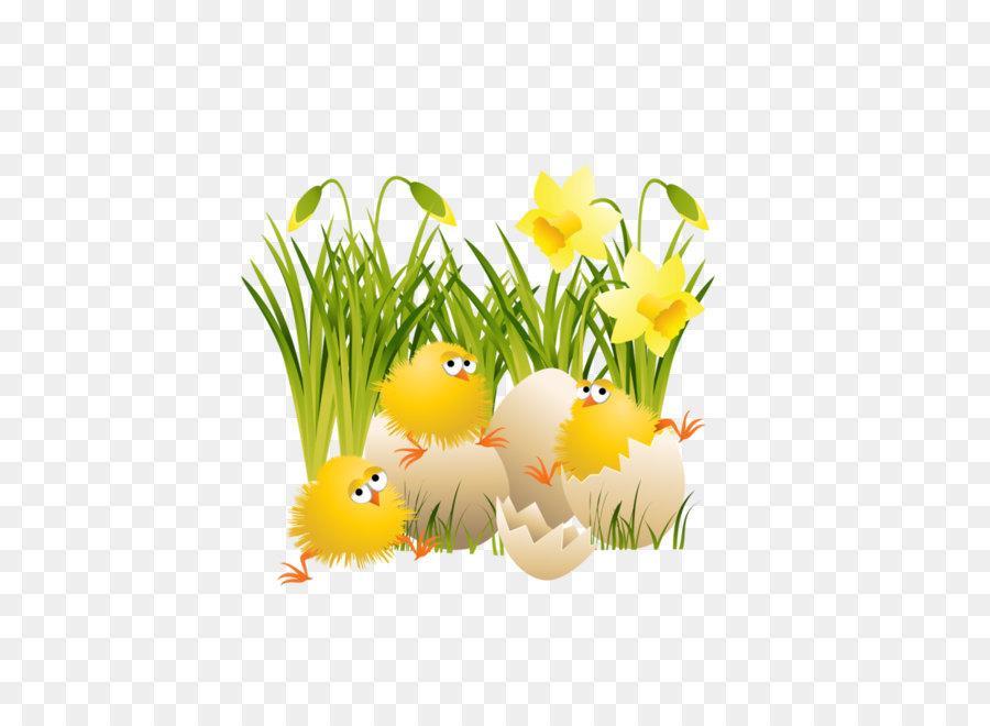 Descarga gratuita de Pollo, Descargar, La Cáscara De Huevo imágenes PNG