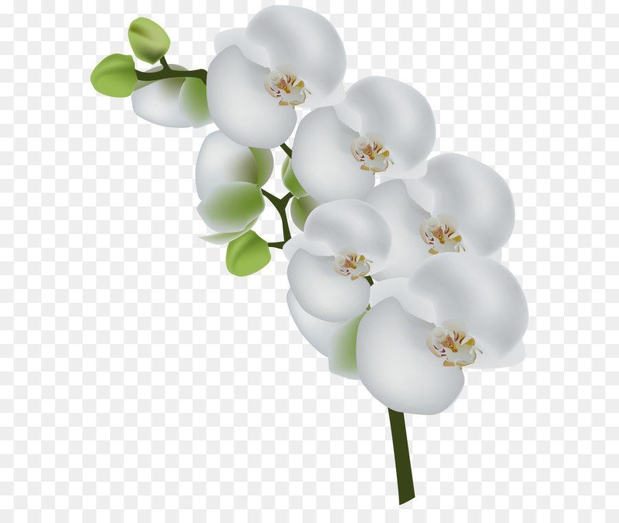 Descarga gratuita de Flor, Las Orquídeas, Blanco Imágen de Png