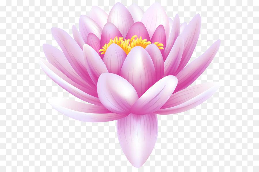 Descarga gratuita de Nymphaea Alba, Arum Lily, Lilium Imágen de Png