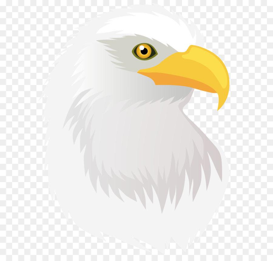 Descarga gratuita de Aves, águila, Accipitriformes Imágen de Png