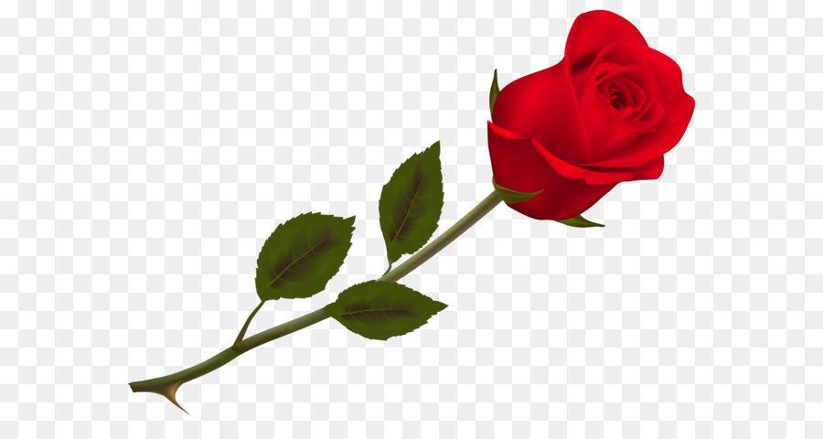 Descarga gratuita de Rosa, Proponer Día, Sms imágenes PNG