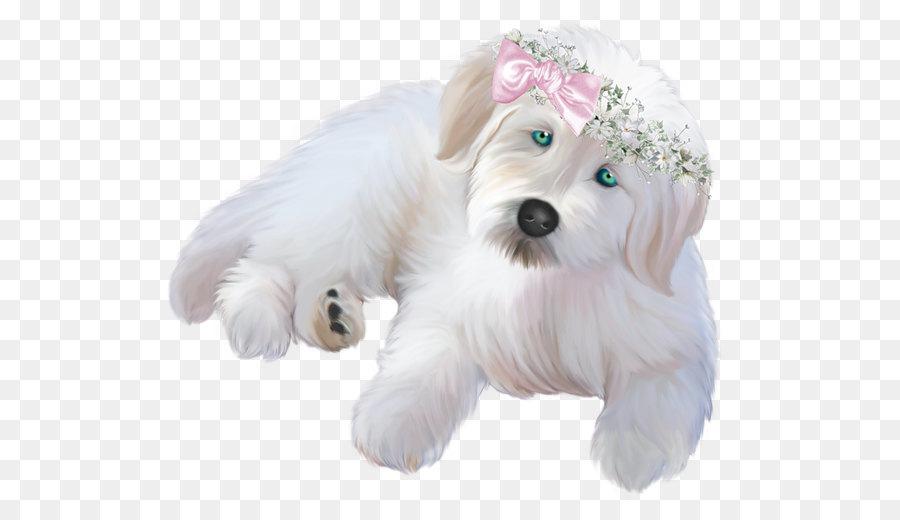 Descarga gratuita de Cachorro, Animal, La Fotografía Imágen de Png
