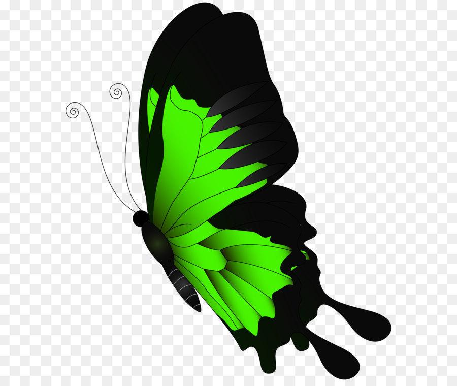 Descarga gratuita de Mariposa, Color, Verde imágenes PNG