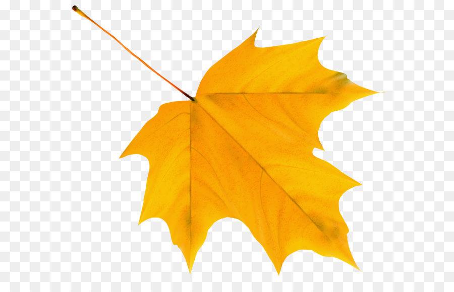 Descarga gratuita de Otoño, Hoja, Amarillo Imágen de Png