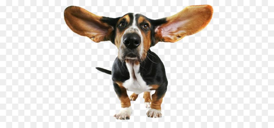 Descarga gratuita de Basset Hound, Beagle, Papillon Perro imágenes PNG
