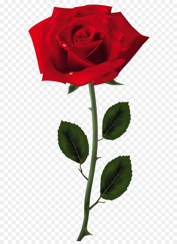 Descarga gratuita de Rosa, Flor, Presentación imágenes PNG