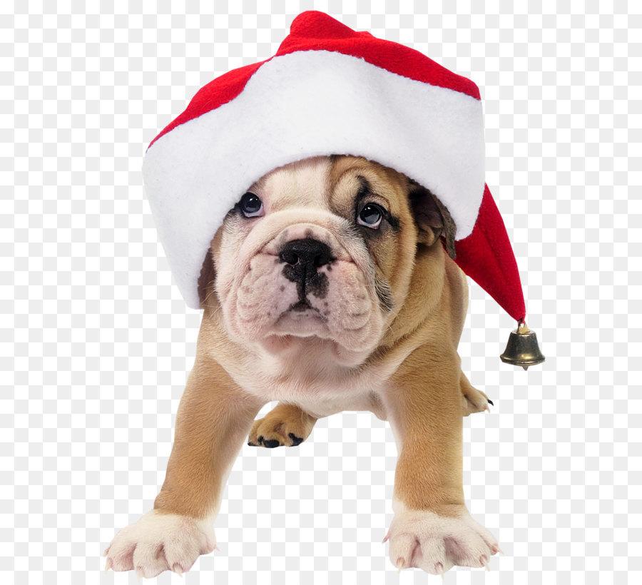 Descarga gratuita de Bulldog, Santa Claus, Cachorro imágenes PNG