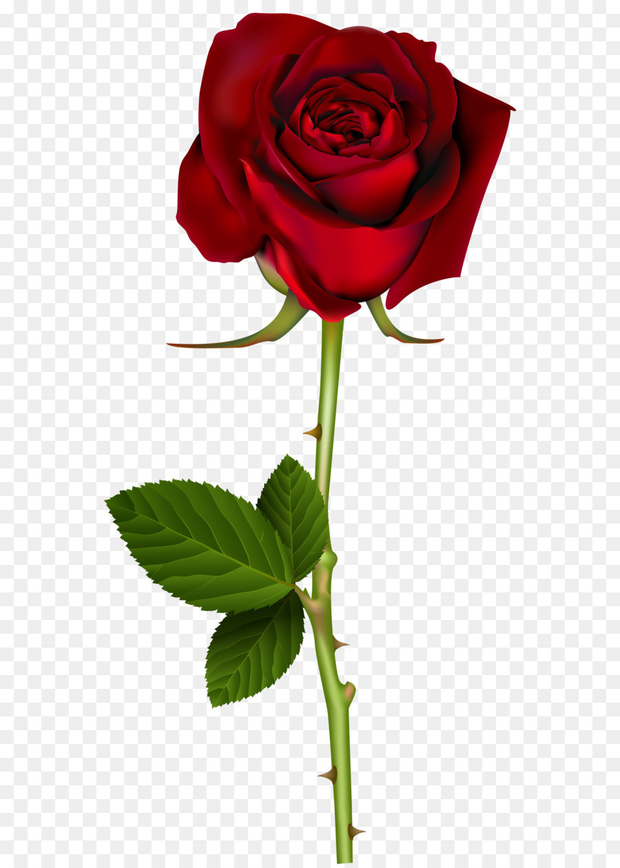 Descarga gratuita de Rosa, Flor, Azul Rosa Imágen de Png