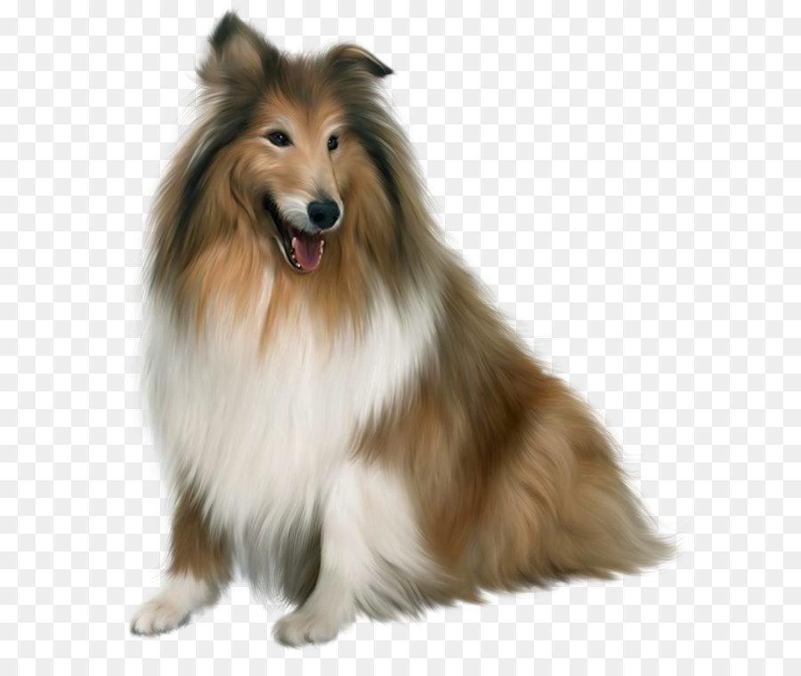 Descarga gratuita de Maltés Perro, Cachorro, Mascota Imágen de Png