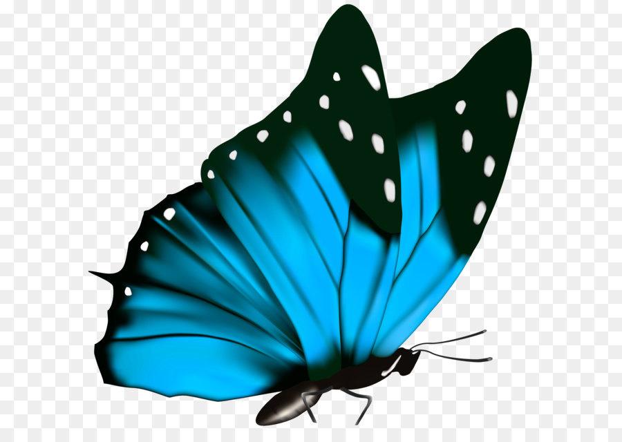 Descarga gratuita de Mariposa, Los Insectos, Verde imágenes PNG