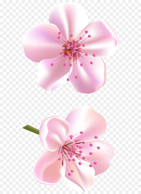 Descarga gratuita de Flor, Rosa Flores, Pétalo imágenes PNG