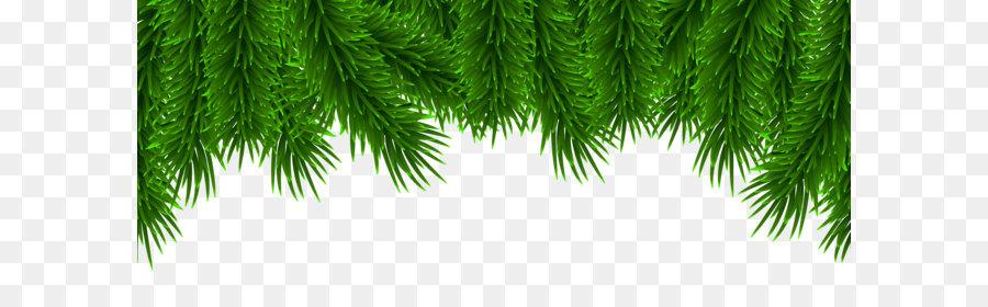 Descarga gratuita de Pino, Abeto, árbol Imágen de Png
