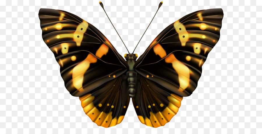 Descarga gratuita de Mariposa, Dibujo, Amarillo imágenes PNG