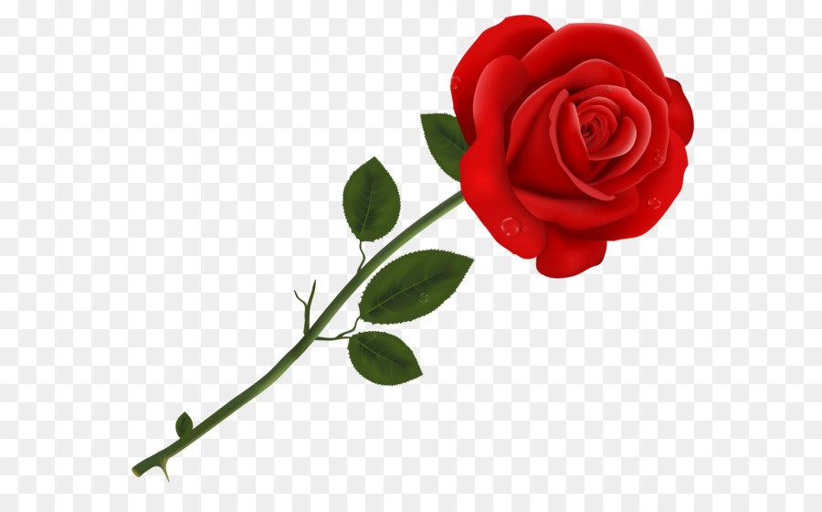 Descarga gratuita de Rosa, Flor, Rojo imágenes PNG