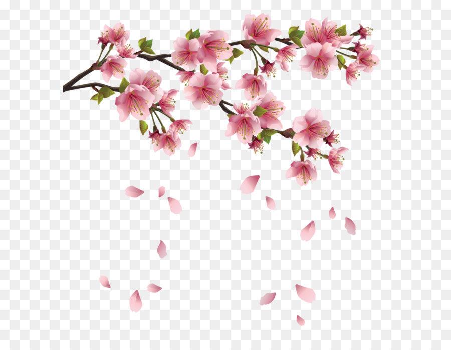 Descarga gratuita de Flor, La Primavera, Pétalo imágenes PNG