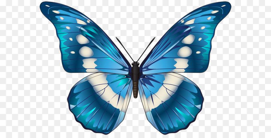 Descarga gratuita de Mariposa, Azul, Nymphalidae imágenes PNG