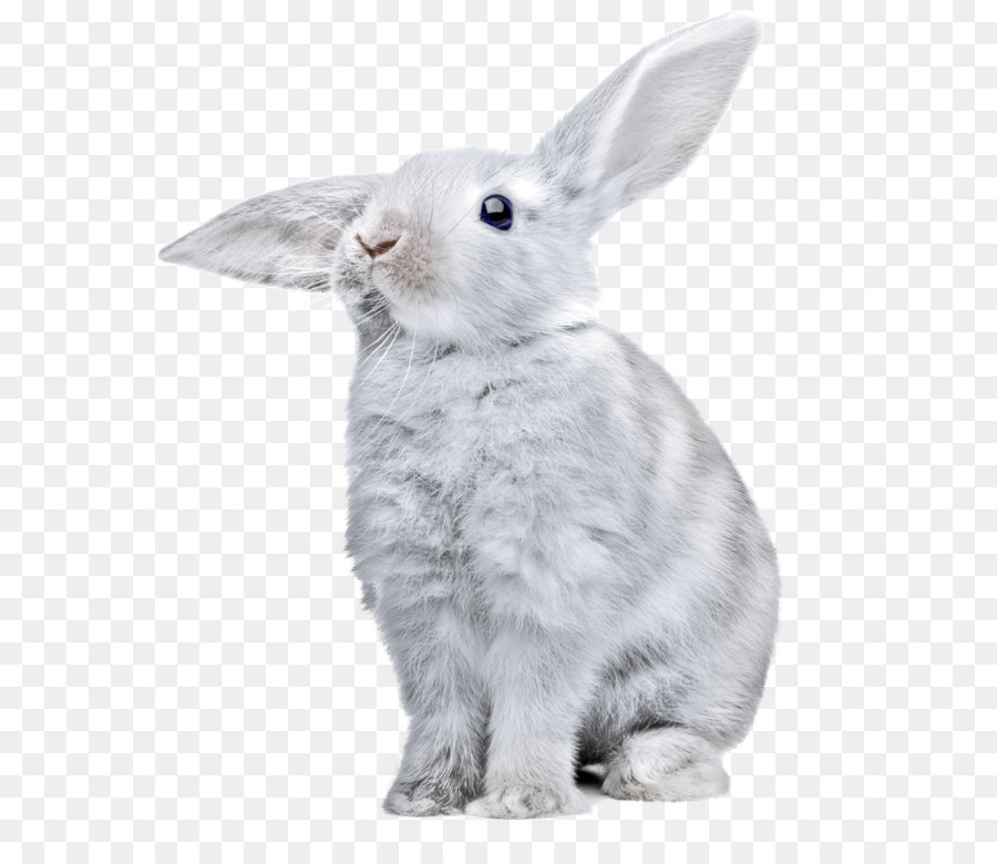 Descarga gratuita de La Liebre, Conejo, Descargar imágenes PNG