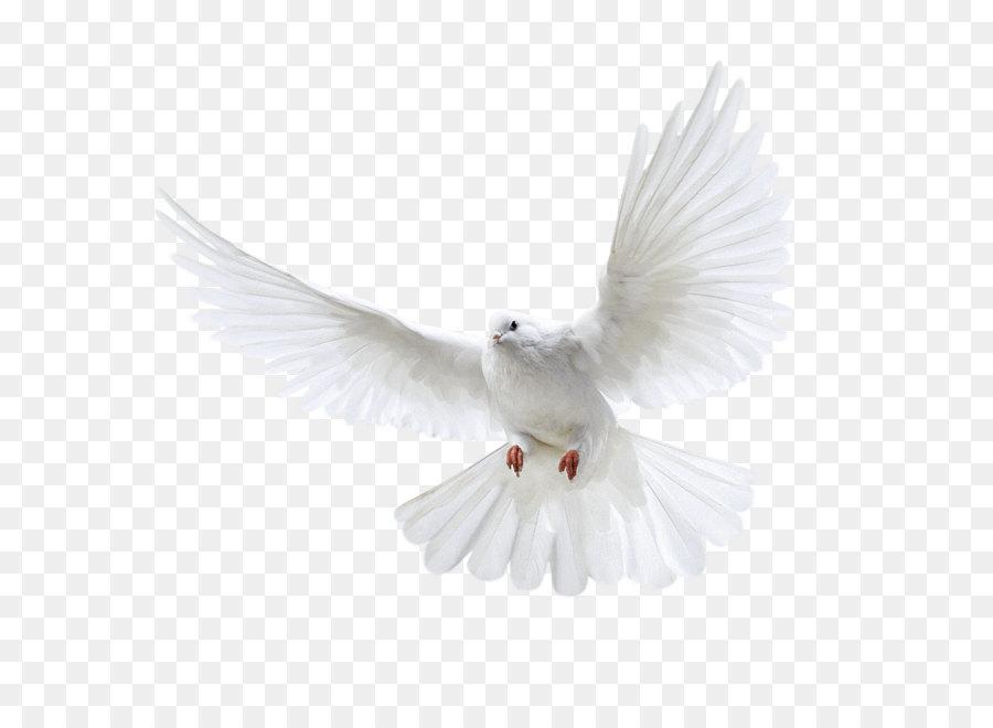 Descarga gratuita de Columbinae, Aves, La Fotografía Imágen de Png