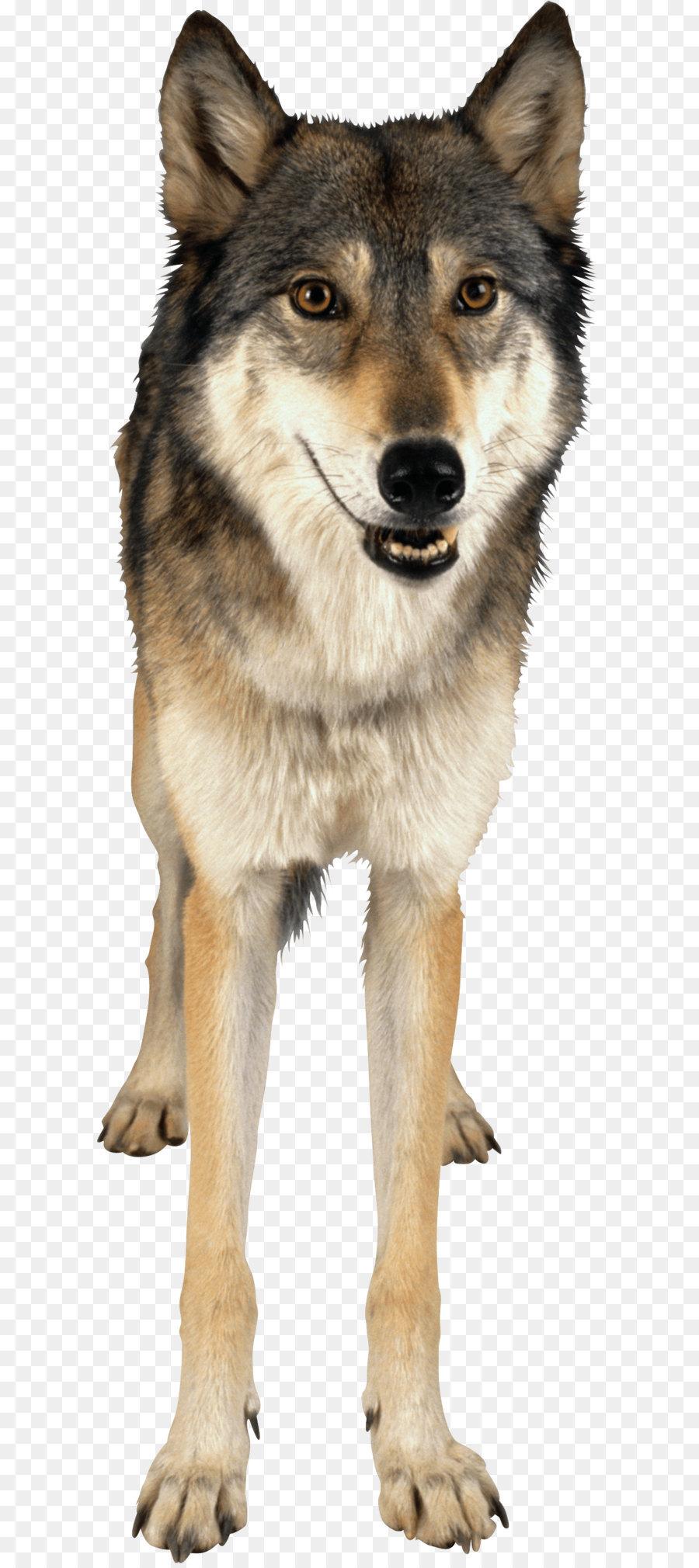 Descarga gratuita de Descargar, Animal, Husky imágenes PNG