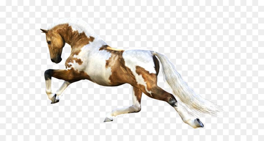 Descarga gratuita de Mustang, Potro, Semental Imágen de Png